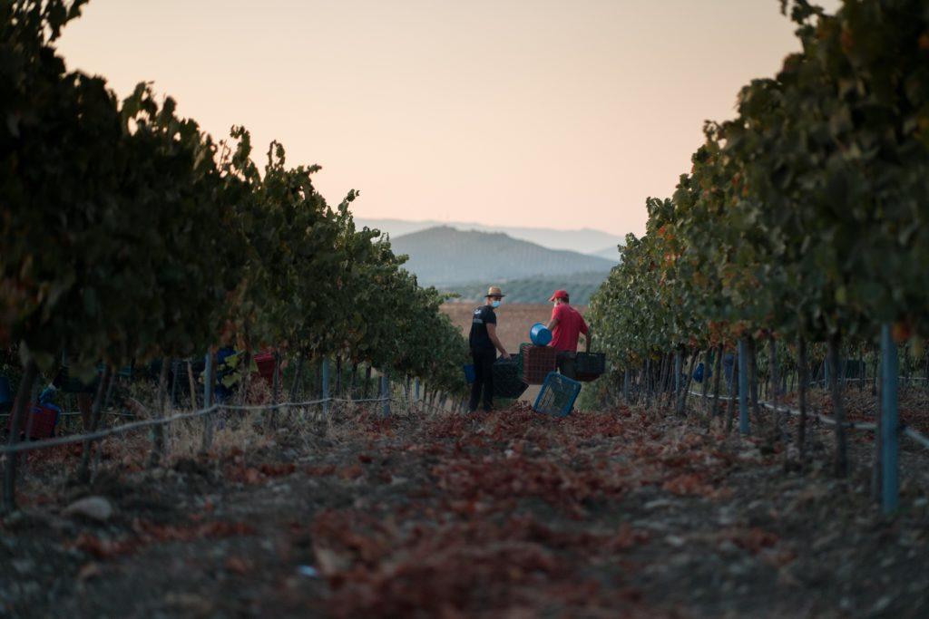 Viñedos de Bodegas Campoameno en la Sierra Sur de Jaén